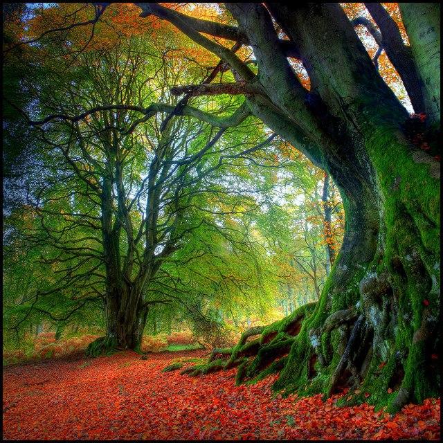 Nature 25-Scotland