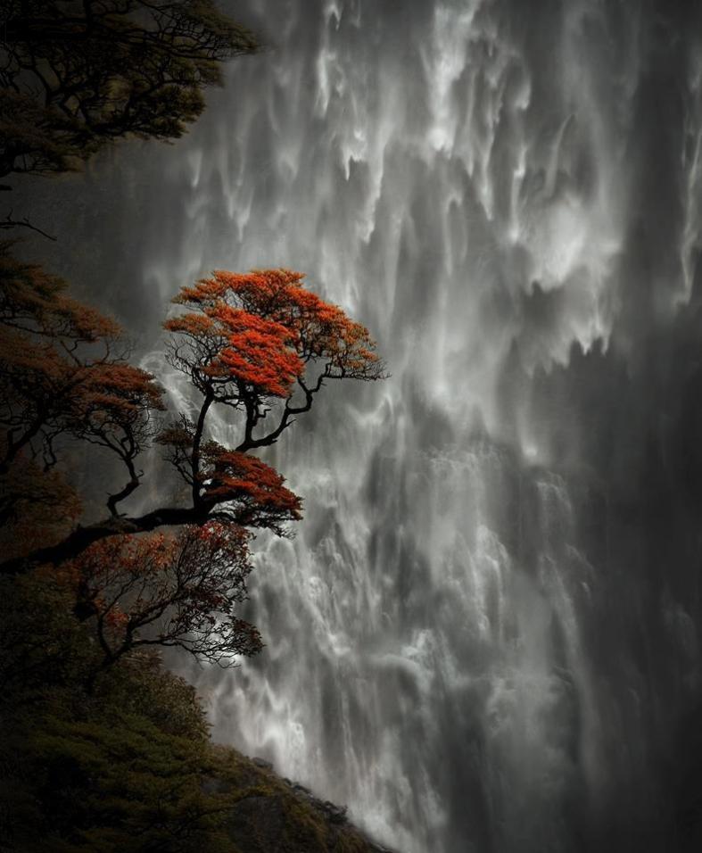 Nature 31-New Zealand