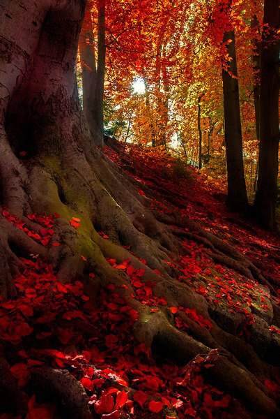 Nature 72-Crimson Forest, Bavarian Alps, Germany
