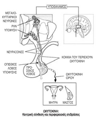 OXYtocyn 3